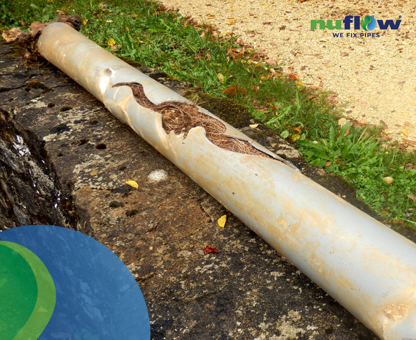 Signs that tree roots are infiltrating your pipes